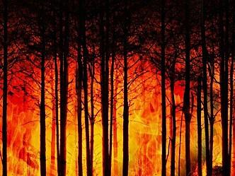 Hvordan forhindre skogbranner som truer bebyggelse?