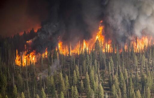 Voldsomme skogbranner herjer i Australia: Kan også skje i Norge om noen år – og da får vi problemer