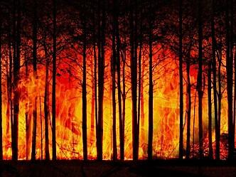 Ny håndbok i håndtering av skogbranner