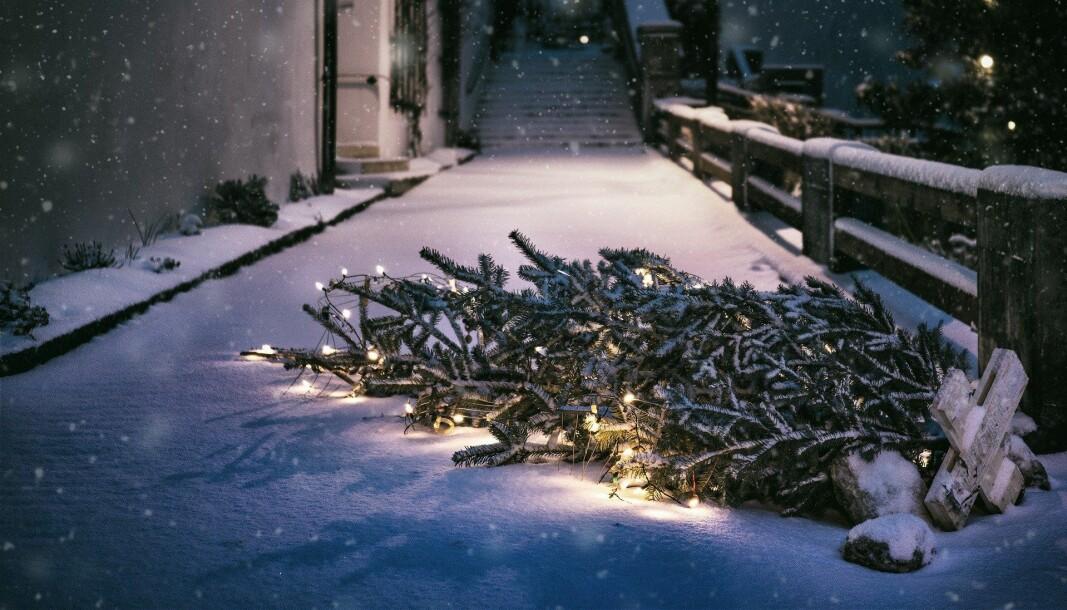 Ikke fyr opp med avdankede juletrær.
