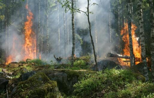 Meteorologisk institutt lanserer ny og bedre skogbrannfareindeks