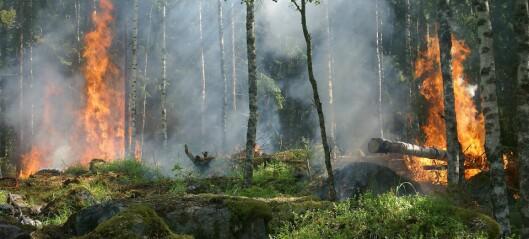 Skogbranner slipper ut enorme mengder Co2